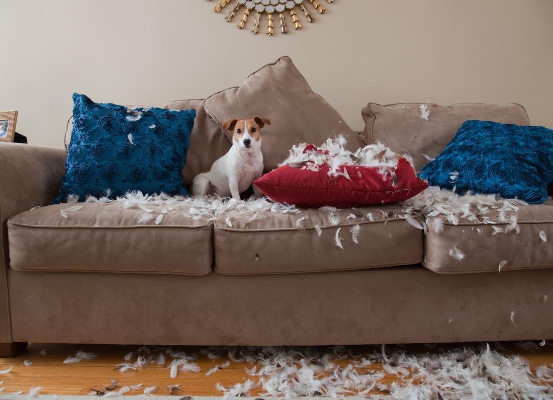Worst Sofa Contest